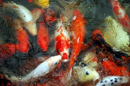 Z punktu widzenia feng shui sztuczne rośliny nie są za dobre, ponieważ tworzywo (często plastik) należy do elementu ognia, który całkowicie kłóci się z wodą